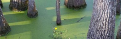 cropped-swamp-2[1]